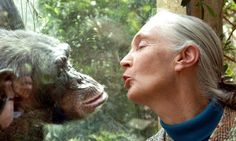 """A sense of calm came over me. More and more often I found myself thinking, """"This is where I belong. This is what I came into this world to do."""" jane goodall"""