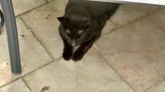 Sandy RainaldiCT Lost Pets 7 hrs  · BLACK  This cat has been hanging around our condos in Manchester CT. We are located off Lydall Rd. Anyone recognize her?