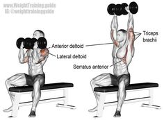 Fitness Articles Tips and Workouts: Arnold press. A compound push exercise, invented b. Chest Workouts, Gym Workouts, At Home Workouts, Workout Fitness, Muscle Fitness, Mens Fitness, Best Shoulder Workout, Shoulder Exercises, Workout Routines