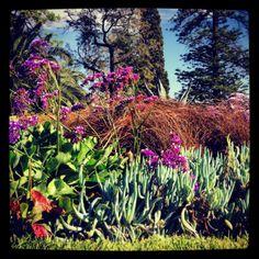 Melbourne Gardens #park #garden #greenery  #flowers #plants #scenicview #vegetation  #Melbourne #amityapartments #southyarra