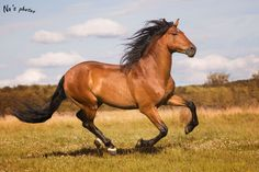 Spanish horses Some Beautiful Images, Beautiful Horses, Horse Photos, Horse Pictures, N Animals, Magical Images, Bay Horse, Horse Art, Zebras
