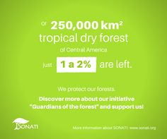 Just 1 to 2% of the Central American tropical dry forest are left. www.sonati.org #savethetrees