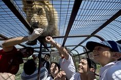 Parque Safari: The Zoo in Chile Where Humans are in Cages and Lions are On Top