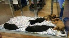 Petition · Office of Fair Trading.: Stop the sale of backyard breed puppies & kittens in petshops in Australia · Change.org
