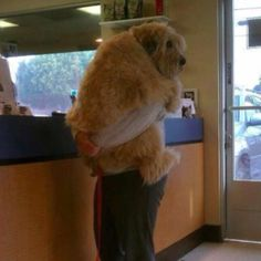 saw this on FB, it was taken at a vet's office. The dog was so scared that his daddy had to hold him:)