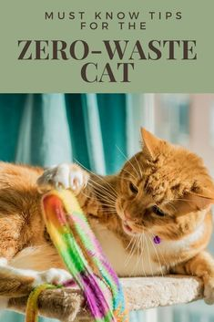 Here are some useful tips on how to live with a zero waste cat. Where to buy cat litter in bulk, what cat poop bags to use, and what bulk cat food really means. Recycling Information, Eco Friendly Cleaning Products, Green Living Tips, What Cat, Sustainable Living, Sustainable Food, Sustainable Energy, Buy A Cat, Cat Paws
