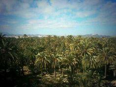 Magnificencia del Palmeral de #Elche
