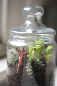 Terrariums - how to