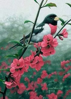 ♡ I saw my first Rosy Breasted Gross-beak on my honeymoon