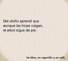 Citas, pensamientos y frases celebres. Pertenecen y las podeís encontrar en mi página de facebook. https://www.facebook.com/Un-libro-un-cigarrillo-y-un-cafe-503194663213939/