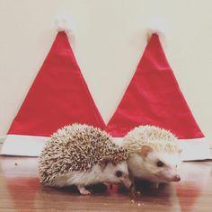 Merry, Animals, Animaux, Animal, Animales, Animais