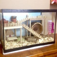 Sophie Little's hamster cage. DIY aquarium conversion.
