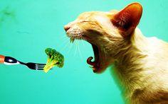 Gato by Eduardo Neposiano on 500px