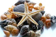 estrella de mar -
