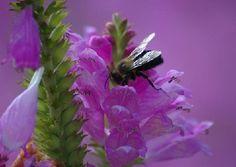 I call this my bee shot. Macro lens.