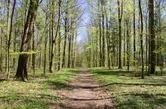 Path in forest in spring - Walking path in a beech forest in spring