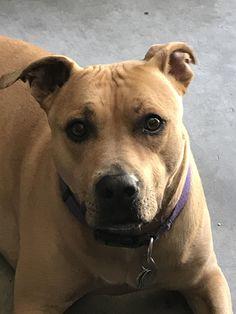 my best friend   http://ift.tt/2rhwxF8 via /r/dogpictures http://ift.tt/2qDni01  #lovabledogsaroundtheworld