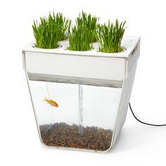 AQUAFARM | Fishbowl & Indoor Herb Garden | UncommonGoods