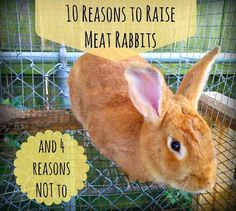 Greneaux Gardens: 10 Reasons to Raise Meat Rabbits (and 4 Reasons Not To)
