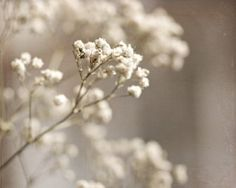 White shabby chic winter pure pale faded cream little flowers