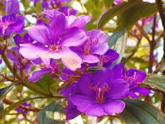 Image detail for -File:Purple flowers 2.jpg - Wikipedia, the free encyclopedia