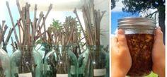 Díky tomuto starému zahrádkářské kouzlu si namnožíte cokoli: Ujme se i to, v co jste už ani nedoufali! - Strana 2 z 2 - Zkustosám cz Mason Jars, Canning Jars, Glass Jars, Jars, Mason Jar
