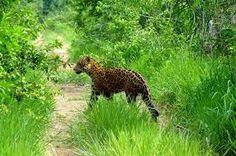 Pantanal Brasil - Pesquisa Google