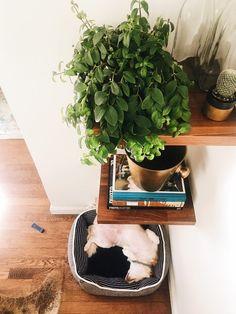 New Darlings - Creating a Joyful Home + Mind