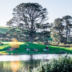 Home of the little ones. The Shire, Hobbiton, New Zealand. Itinerary Planner, Travel Planner, New Zealand Travel, Hot Springs, Trip Planning, Wonders Of The World, Travel Photography, Places To Visit, Tours