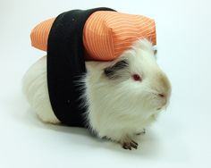 Guinea pig Brain's sushi costume for Halloween - made from spoonflower fabric printed up to look like raw salmon