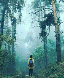 #trekking #travel #mist #morning #morningwalk #munnar #hills #forest #kerala #tourism #travel #destination