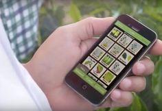App que identifica problemas de enfermedades o falta de nutrientes en las plantas. El Yara