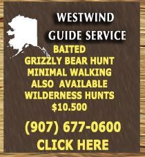 The Deluxe BAITED Grizzly Bear hunt , you would stay in a comfortable lodge shower daily, meals provided, and be transported daily to a working bait station via aircraft or ATV with your guide. Minimal walking required on this hunt . 7 or 10 day hunts. Pickup Point is Anchorage.
