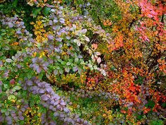 all that autumn color  By bricolagelife