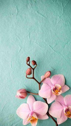 Pink Flower Cellphone Wallpaper - 2021 Cute Wallpapers