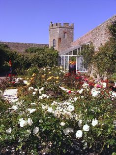 'Castle Mey Garden' - David Pratt |  Nr John O'Groats