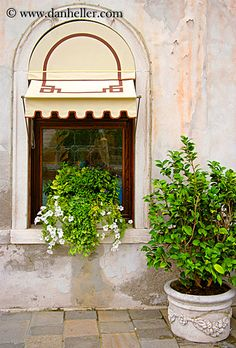 window-n-potted-plant.jpg doors & windows, europe, images, italy, plants, potted, venecia, venezia, venice, vertical, windows