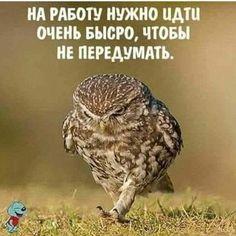 А у вас утро доброе? 👍😂👌215-34-55 Flores-krsk.ru #красноярск #флорист #салонцветов #деньрождения #праздник #красноярскийкрай #повод…