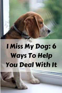 """I Miss My Dog: 6 Ways To Help You Deal With It. Famous actor Will Rogers once said, """"If there are no dogs in Heaven, then when I die, I want to go where. Miss My Dog, Dog Heaven, When I Die, Negative Thinking, Losing Someone, Puffy Eyes, Psychology Today, What Happened To You, Losing A Dog"""