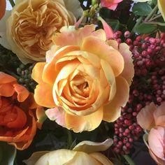 """This garden rose is """"Helios"""". #local #garden #roses #cagrownflowers #sfbrannanstwholesale #flowers"""