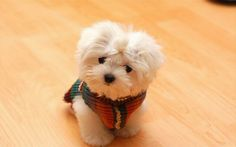 sweaters on dogs♥