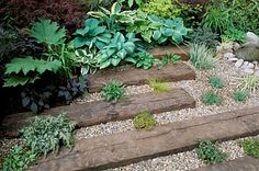 HOSTAS_GROW_BETWEEN_RAILWAY_SLEEPERS_SET_INTO_GRAVEL_IN_THE_LAMBETH_HORTICULTURAL_SOCIETY_COURTYARD_