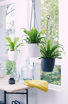 Kết quả hình ảnh cho plantes suspendues d intérieur