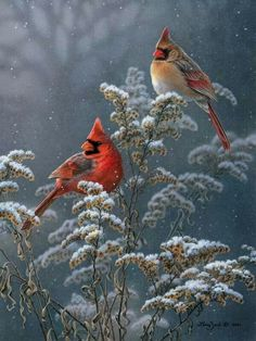 Winter.... snow birds!