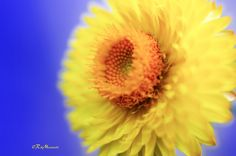 Yellow by Riccardo Martinelli on 500px