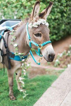 Pin by Megan K. on Ceramic inspiration Cute Donkey, Mini Donkey, Donkey Donkey, All The Pretty Horses, Beautiful Horses, Animals Beautiful, Farm Animals, Animals And Pets, Cute Animals