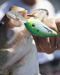 Lure Tip: How To Choose the Right Crankbait for Any Situation