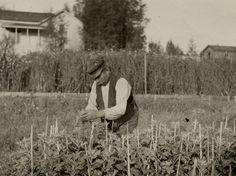 puutarha historia - Google-haku