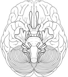 Brain coloring page School Pinterest Brain Human body and
