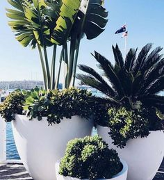 Easy Container Gardening Ideas for Your Potted Plants . The best part: You can plant anything in a planter as long as there's plenty of . Easy Container Gardening Ideas for Your Potted Plants . Outdoor Pots, Outdoor Gardens, Outdoor Potted Plants, Potted Palms, Large Outdoor Planters, White Planters, Indoor Outdoor, Container Plants, Garden Art